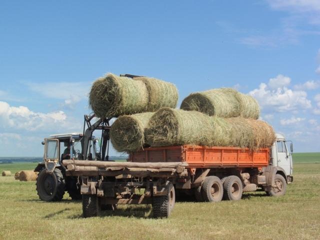 Мужчина из Хабеза выкосил чужой участок земли в Исправной и вывез сено