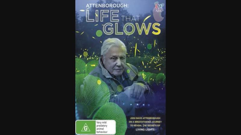 BBC «Живой свет с Дэвидом Аттенборо_ Биолюминесценция» (Познавательный, природа,