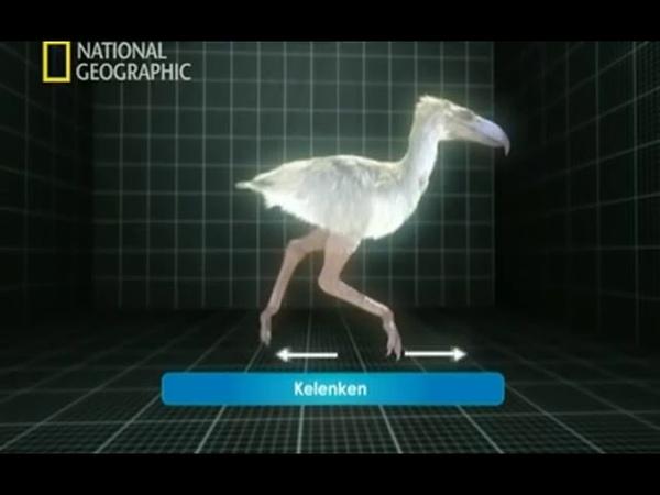Depredadores Prehistóricos - 05 - El Terrorífico Raptor - National Geographic (2007)