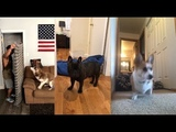Флешмоб Исчезновение на глазах у собаки What the fluff #WhatTheFluffChallenge