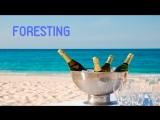 FORESTING ICO Обзор - Новая децентрализованная социальная сеть