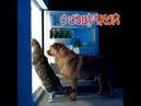 Приколы с котами с ОЗВУЧКОЙ - СМЕШНЫЕ коты и кошки 2018 до слёз! Смешные животные от Domi Show