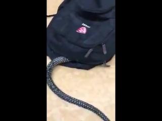 Змея залезла моему другу в рюкзак(.