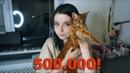 КОТ ЗА 500.000 КАК ИГРУШКА