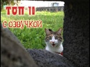 Приколы с котами с ОЗВУЧКОЙ – Ржака до слёз - ТОП 10 ПРИКОЛОВ от PSO
