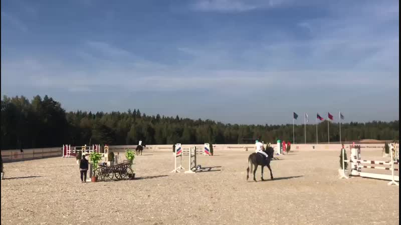 Horse for sale (Полукровная кобыла)