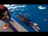 Знакомство с дельфинами!