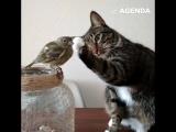 Котики тоже любят животных