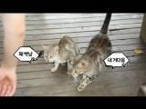 [VIDEO] Чанёль кормит кошечек :3 @