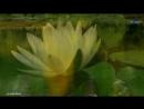 ♡ Michel Pépé - Le Lotus Sacré