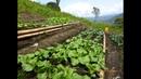 Características de la Agroecologia una Agricultura Más Sana - TvAgro por Juan Gonzalo Angel