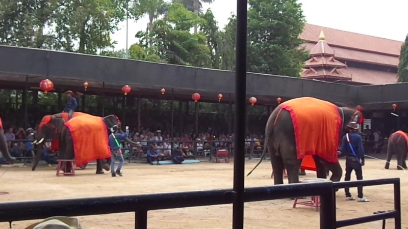 Тайланд-Шоу слонов