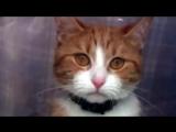 Видео про котика. До слёз