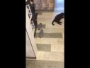 Ленивый кошачий дрифт