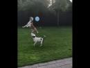 Думаю, що ці собаки набивають м'яч краще, ніж більшість українських футболістів