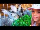Кошечки Кролики Цыплята Мои ПИТОМЦЫ Кормим животных Собираем ягоды ЧЕЛЛЕНДЖ с закрытыми глазами