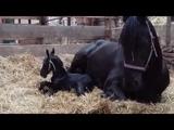 Cornelia with her newborn foal