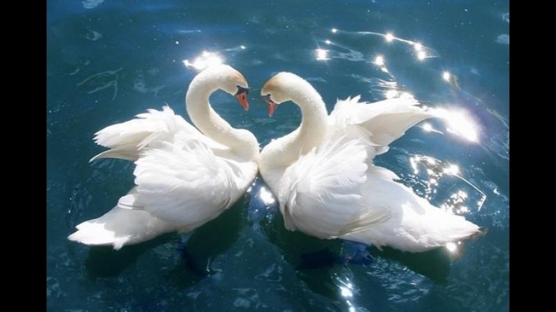 Захаваць гармонію адносін! — «Сямейная праграма»