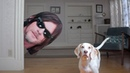 Dogs vs Norman Reedus Prank: Funny Dogs Maymo Potpie