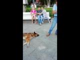 Поющий пёс