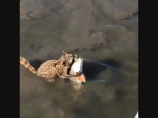 Ты рыбачка не жыдись и с енотом поделись