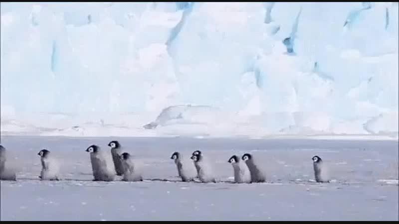 пингвиний дет сад
