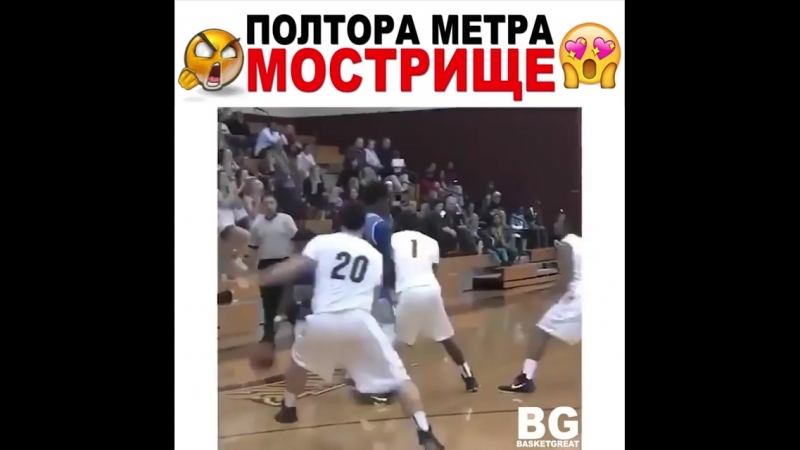 Basketball Vine 1261