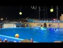 Дельфинарий в Архипо-Осиповке👏👏👏