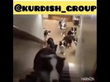 Instagram_kurdish_group_41179747_236190730410588_5370800807727857664_n.mp4