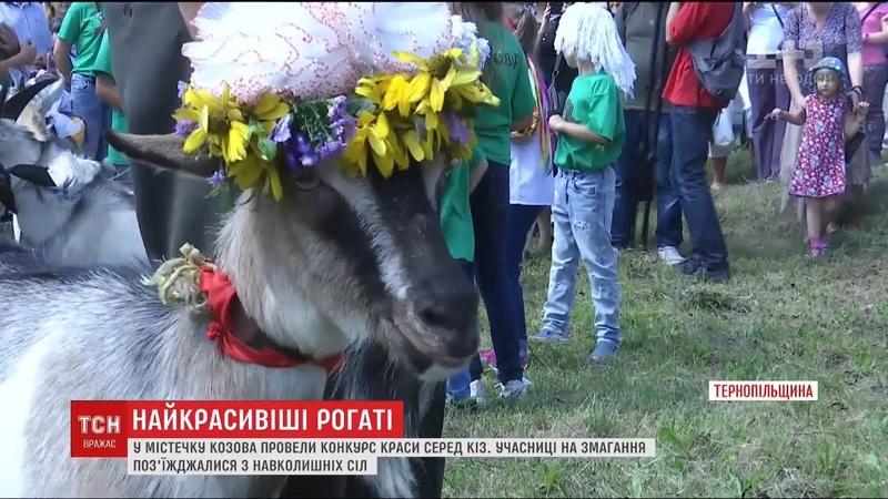 На Тернопільщині влаштували конкурс краси серед кіз