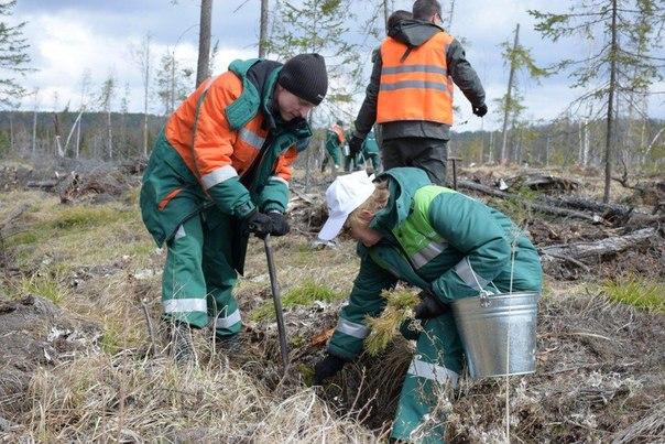 Усть-Илимск присоединился к Всероссийской акции «День посадки леса»