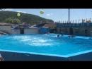 Дельфинарий 1 г. Архипо-Осиповка