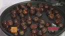 Выращивание каштана мягчайшего для еды в Китае и в его тени и на его древесине грибов 20171018 农广天地 农田餐桌 树上板栗甜 树下栗蘑香