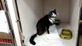 Кошка выжила после ДТП и учится заново ходить после операции help the cat