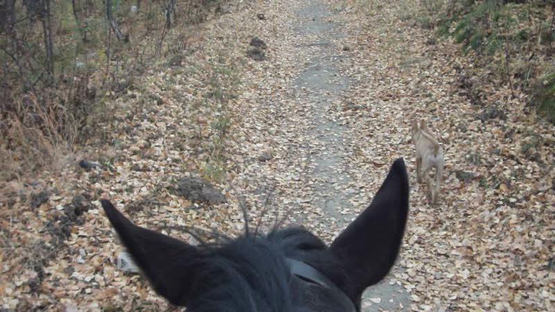 Верховая езда - королевское увлечение наших детей )
