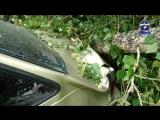 Тополь упал на автомобиль Дэу Нексия