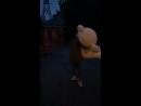 Живые Видео отзывы Плюшевых Мишек