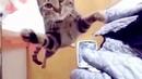 Смешные животные кошки и собаки и прочее... Подборка приколов про животных