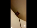 Ириска играет в прятки