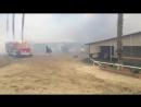 Пожары в Калифорнии: лошади гибнут в огне