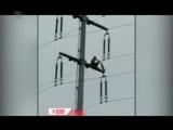 Мужчина залез на электрический столб, и зачем-то решил ударить по высоковольтным проводам тряпкой.