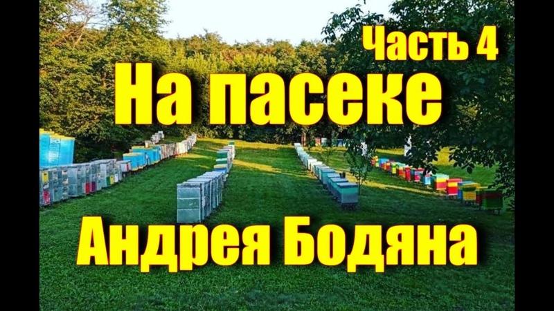 На пасеке Андрея Бодяна - Летний визит /Часть четвертая/