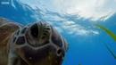 Задержите дыхание на эти минуты, окунитесь с головой! Голубая Планета II - BBC