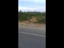 Лошади мои якутские как же они любят Диму😀