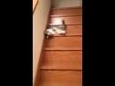 Когда пьяный спускаешься по ступеням