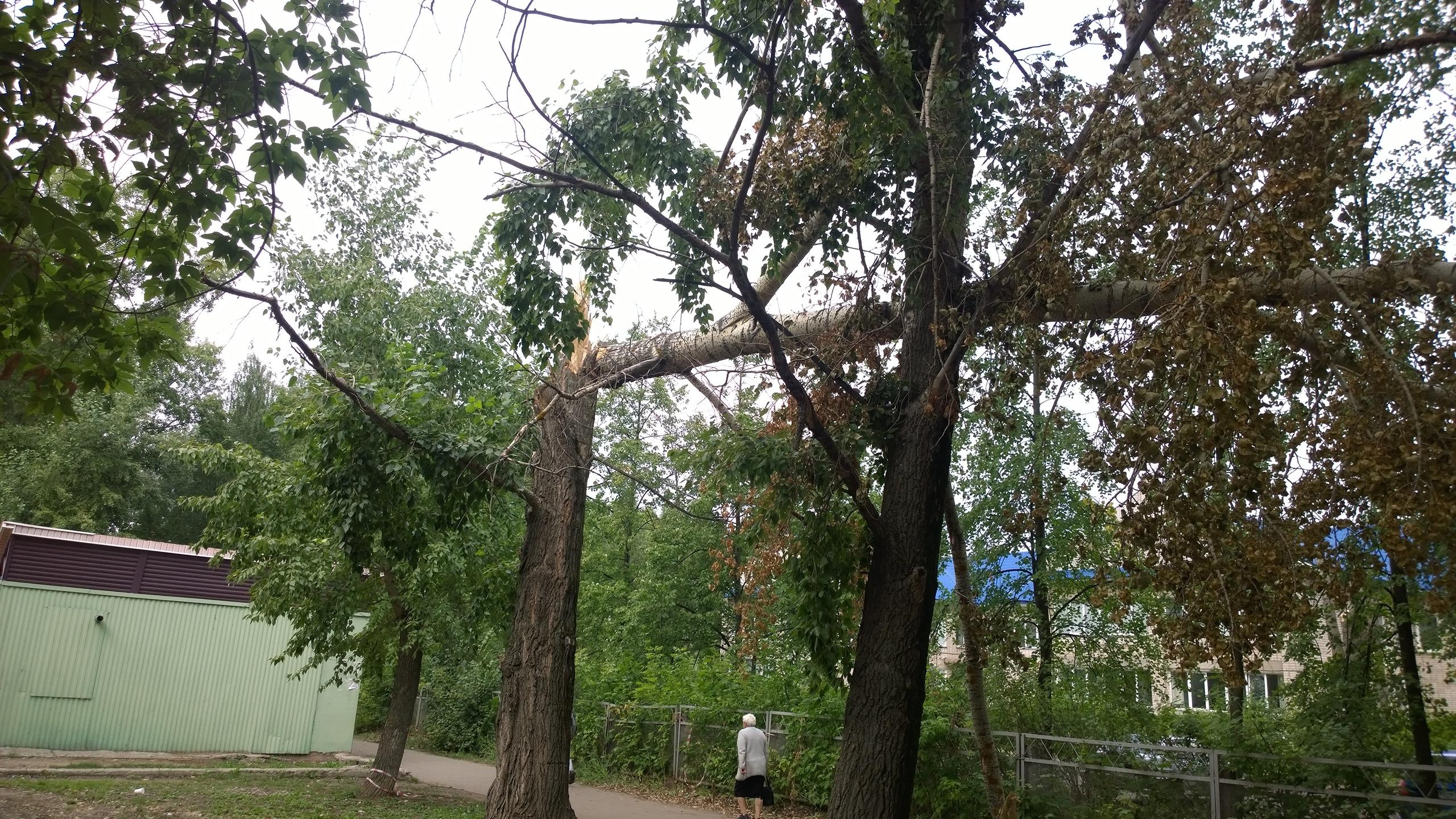 сломанные деревья, чайковский район, 2018 год