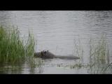 Сплавляюсь по реке Замбези с бегемотами)
