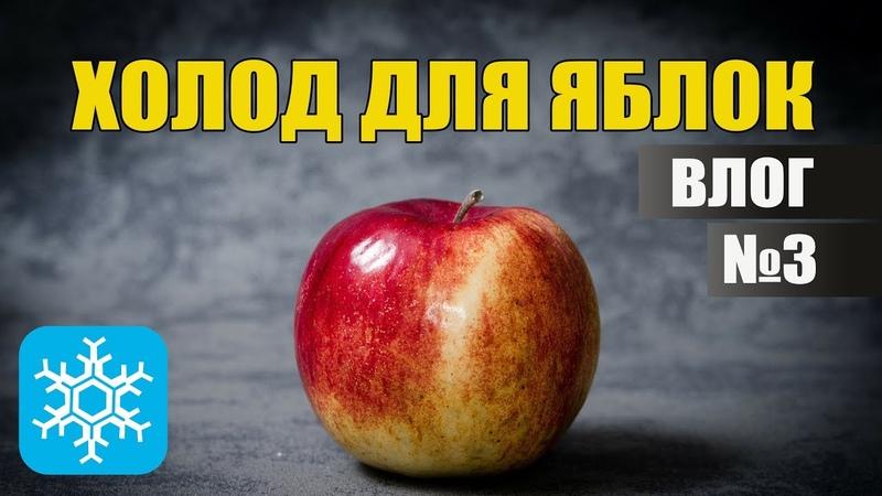 Холодильное оборудование для хранения яблок | ВЛОГ №3
