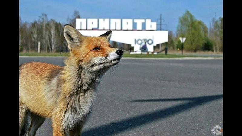 Экскурсия в Припять 2 ЧАЭС Столовая Лис Семён Excursion to Pripyat 4K