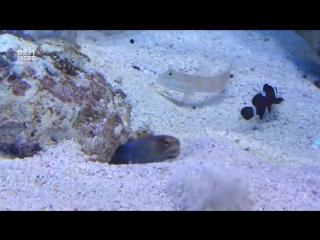 Подлая рыбка